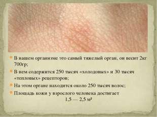 В нашем организме это самый тяжелый орган, он весит 2кг 700гр; В нем содержит
