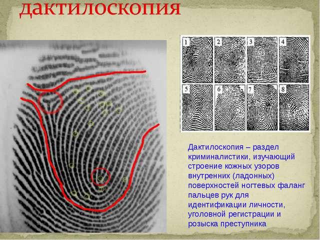 Дактилоскопия – раздел криминалистики, изучающий строение кожных узоров внутр...