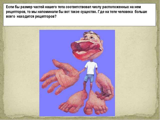 Если бы размер частей нашего тела соответствовал числу расположенных на нем р...