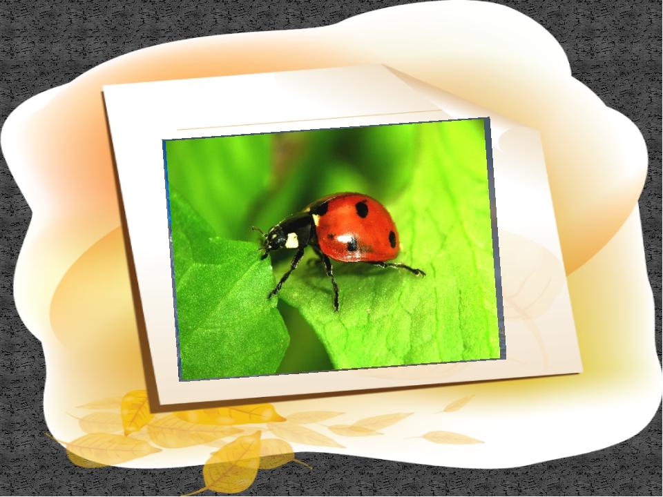 Экологическая игра «Паутина жизни» На главную