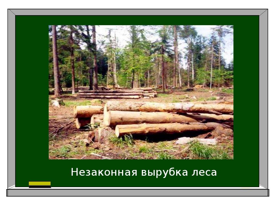 Незаконная вырубка леса