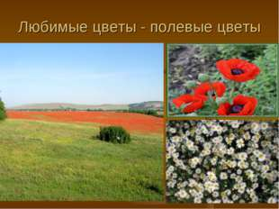 Любимые цветы - полевые цветы