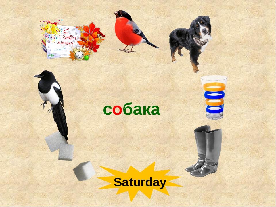 собака Saturday