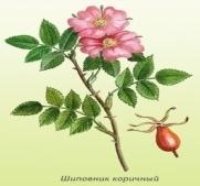 http://tsarstvo-aromatov.ru/assets/images/plants/shipovnik1.jpg