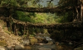 http://pozitiv-news.ru/wp-content/uploads/2012/03/living-root-bridges-meghalaya-india-600x402.jpg