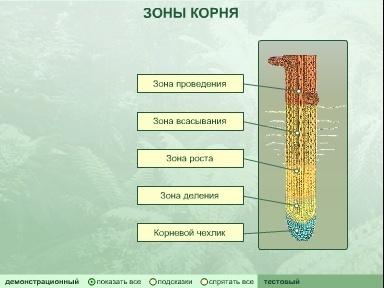 http://tana.ucoz.ru/_ld/13/98591.jpg