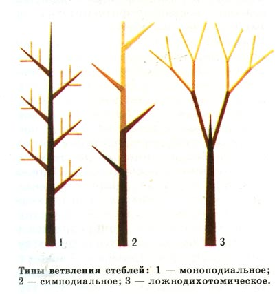 http://forest.geoman.ru/forest/item/f00/s00/e0000374/pic/000_137.jpg