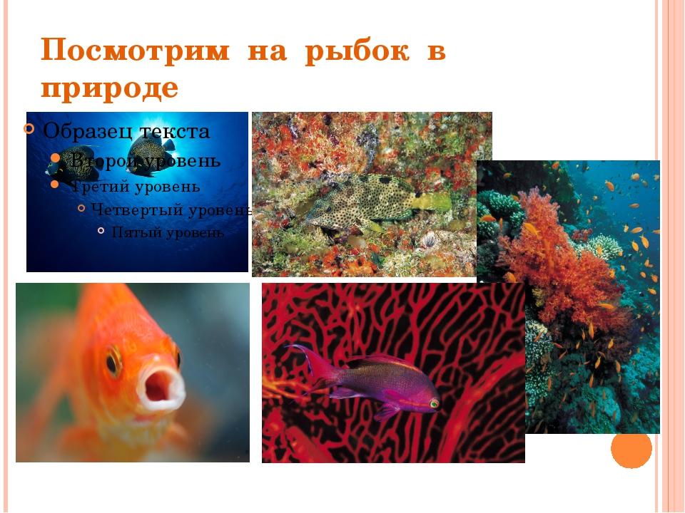 Посмотрим на рыбок в природе