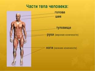 Части тела человека: голова шея туловище ноги (нижние конечности) руки (верхн