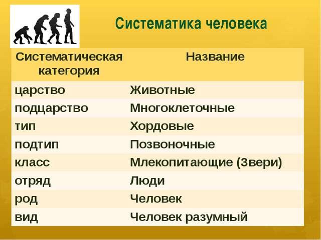 Систематика человека Систематическая категория Название царство Животные подц...