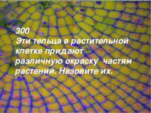 300 Эти тельца в растительной клетке придают различную окраску частям растени