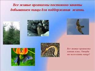 Все живые организмы постоянно заняты добыванием пищи для поддержания жизни. В