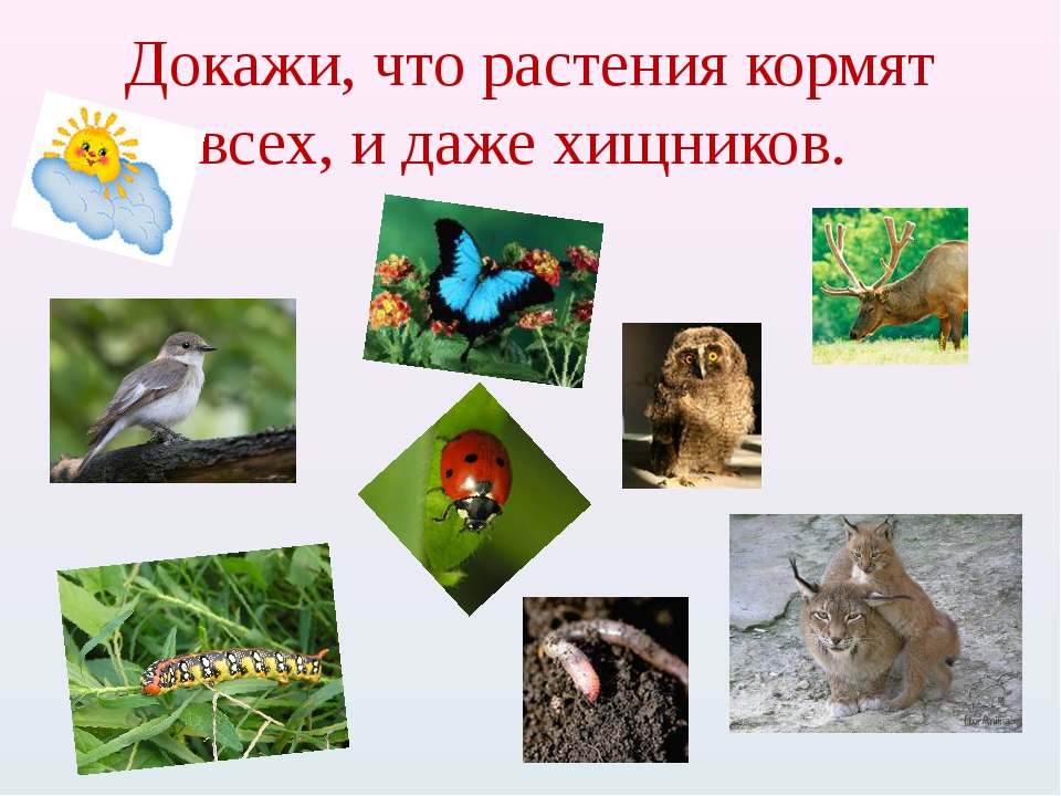 Докажи, что растения кормят всех, и даже хищников.