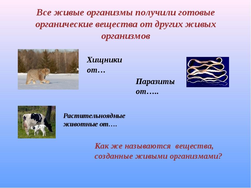 Все живые организмы получили готовые органические вещества от других живых ор...