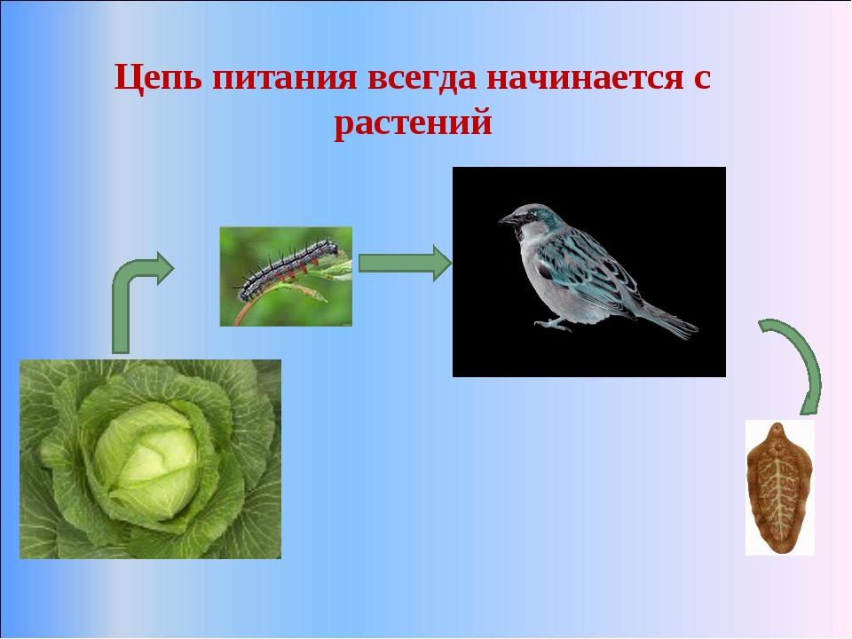 Цепь питания всегда начинается с растений