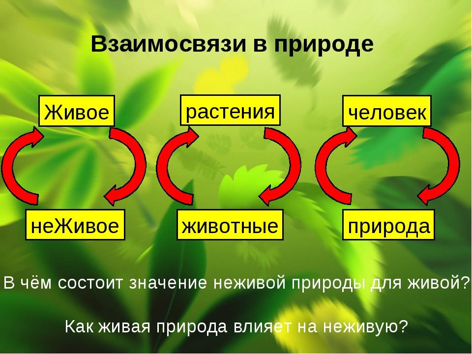 Взаимосвязи в природе Живое неЖивое растения животные человек природа В чём с...