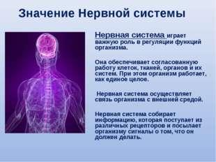 Нервная система играет важную роль в регуляции функций организма. Она обеспеч