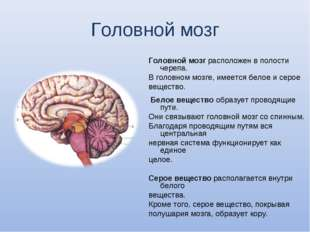 Головной мозг Головной мозг расположен в полости черепа. В головном мозге, им