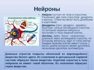 Нейроны Нейрон состоит из тела и отростков. Различают два типа отростков: ден