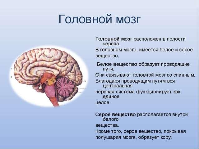 Головной мозг Головной мозг расположен в полости черепа. В головном мозге, им...
