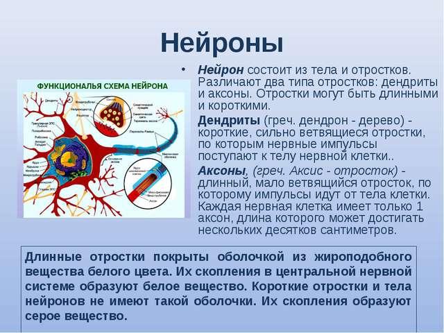 Нейроны Нейрон состоит из тела и отростков. Различают два типа отростков: ден...