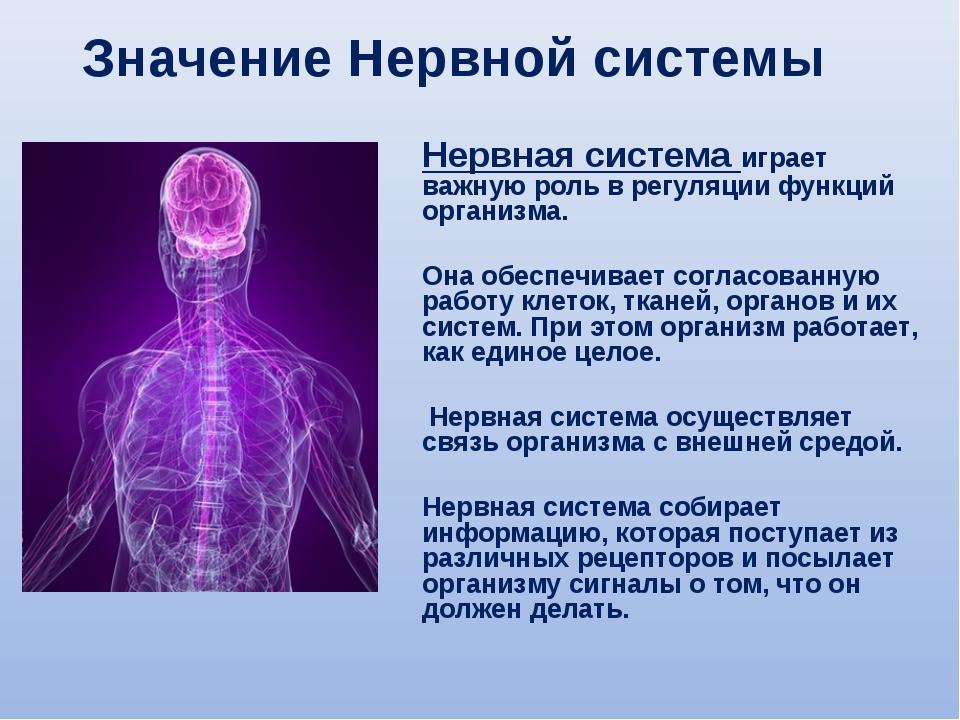 Нервная система играет важную роль в регуляции функций организма. Она обеспеч...