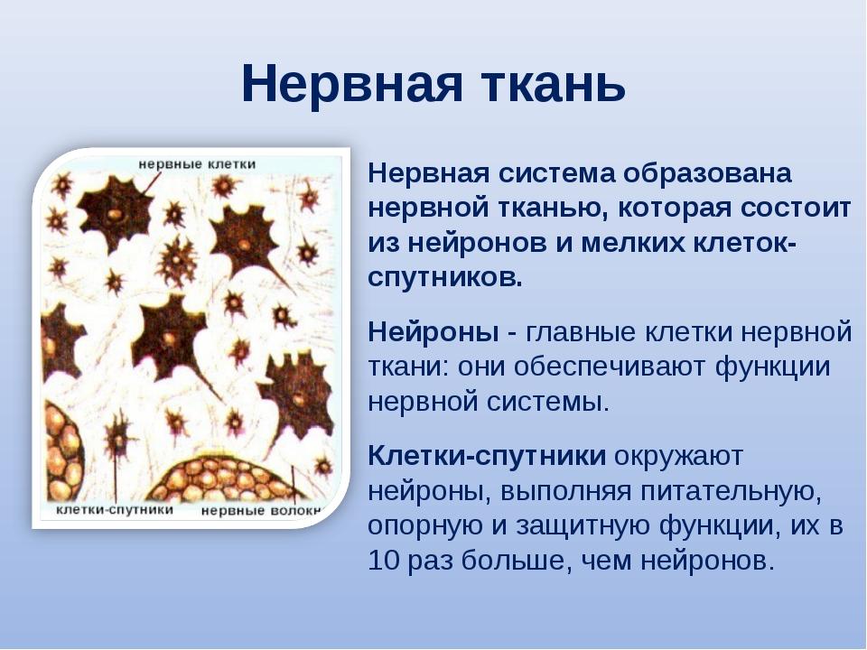 Нервная ткань Нервная система образована нервной тканью, которая состоит из н...