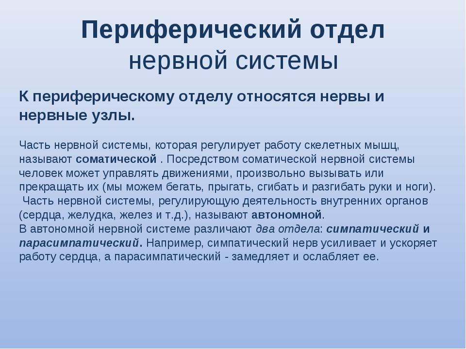Периферический отдел нервной системы К периферическому отделу относятся нерв...