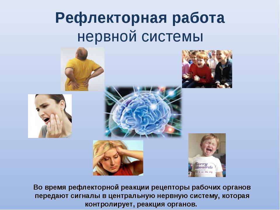 Рефлекторная работа нервной системы Во время рефлекторной реакции рецепторы...