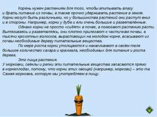 Корень нужен растениям для того, чтобы впитывать влагу и брать питание из по