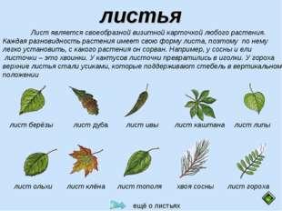 листья Лист является своеобразной визитной карточкой любого растения. Каждая
