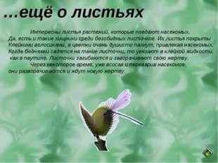 …ещё о листьях Интересны листья растений, которые поедают насекомых. Да, ест