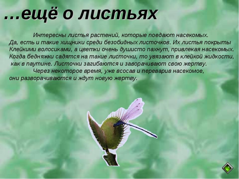 …ещё о листьях Интересны листья растений, которые поедают насекомых. Да, ест...