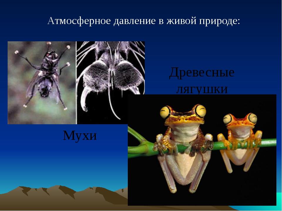 Атмосферное давление в живой природе: Древесные лягушки Мухи