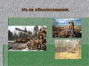 Из-за обезлесевания.