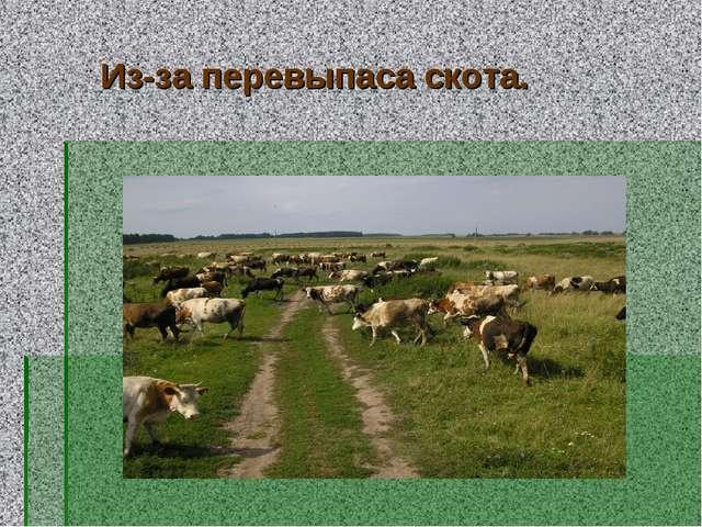 Из-за перевыпаса скота.
