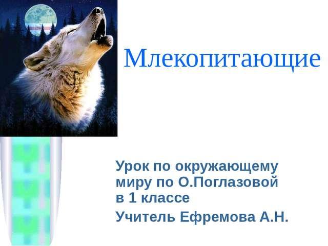 Млекопитающие Урок по окружающему миру по О.Поглазовой в 1 классе Учитель Ефр...