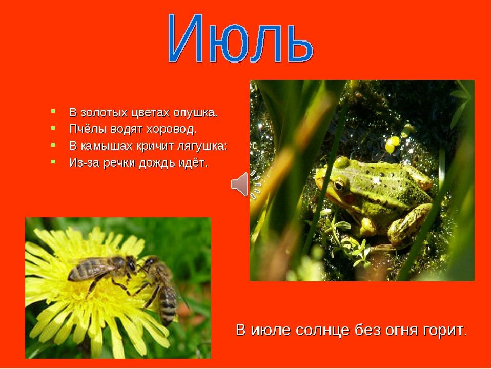 В золотых цветах опушка. Пчёлы водят хоровод. В камышах кричит лягушка: Из-за...