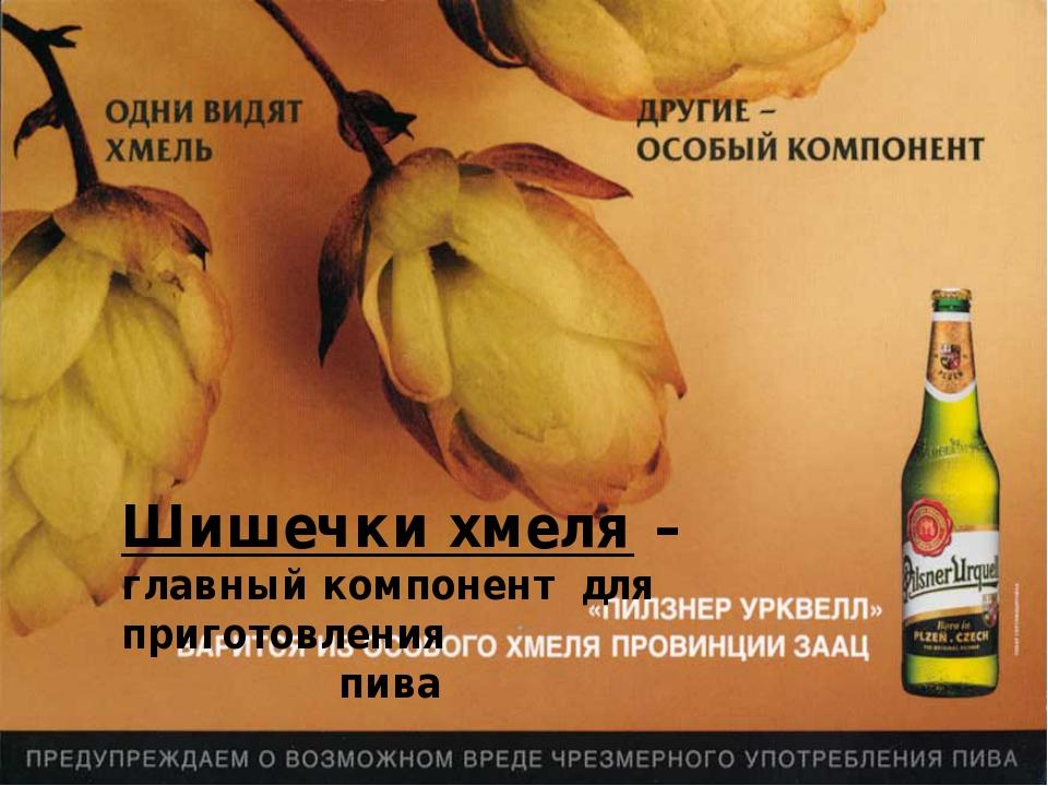 Шишечки хмеля – главный компонент для приготовления пива