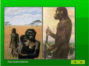 Примерно 3 миллиона лет назад некоторые дриопитеки спустились с деревьев и ст