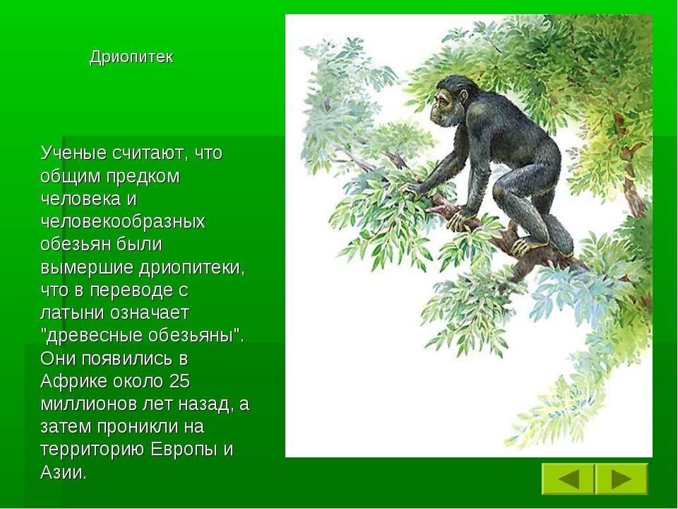 Ученые считают, что общим предком человека и человекообразных обезьян были в...