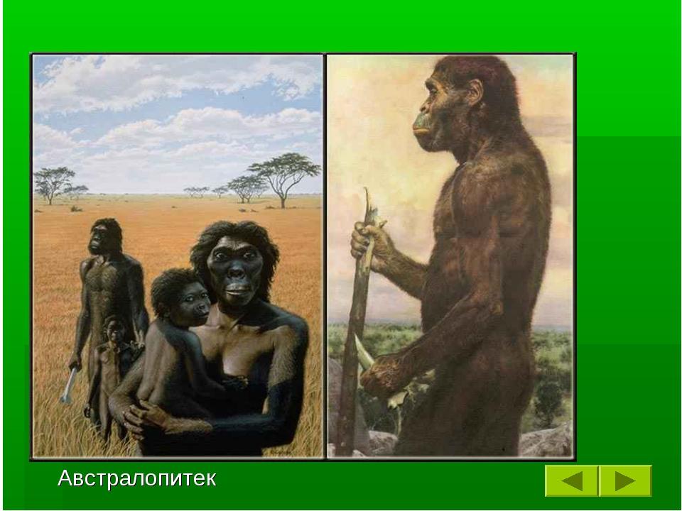 Примерно 3 миллиона лет назад некоторые дриопитеки спустились с деревьев и ст...