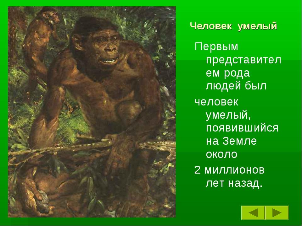 Человек умелый Первым представителем рода людей был человек умелый, появивший...