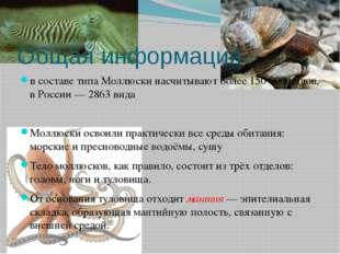 Общая информация в составе типа Моллюски насчитывают более 150000 видов, в Р
