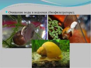 Очищение воды в водоемах (биофильтраторы);