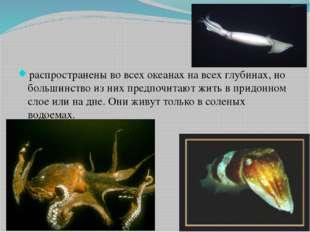 распространены во всех океанах на всех глубинах, но большинство из них предп