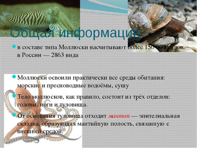 Общая информация в составе типа Моллюски насчитывают более 150000 видов, в Р...