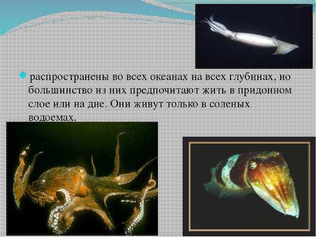 распространены во всех океанах на всех глубинах, но большинство из них предп...