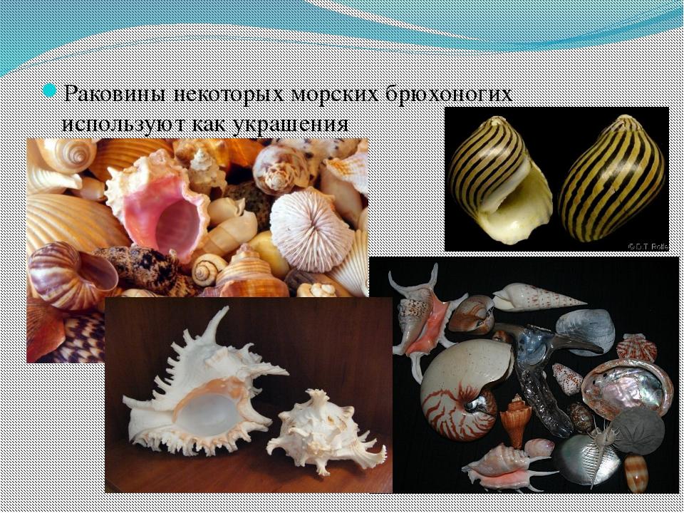 Раковины некоторых морских брюхоногих используют как украшения