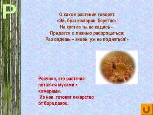 О каком растении говорят: «Эй, брат комарик, берегись! На куст ее ты не садис